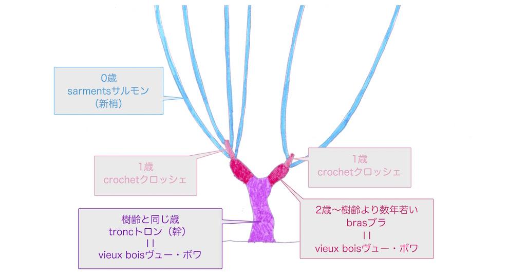 ぶどう樹の枝の年齢と名称