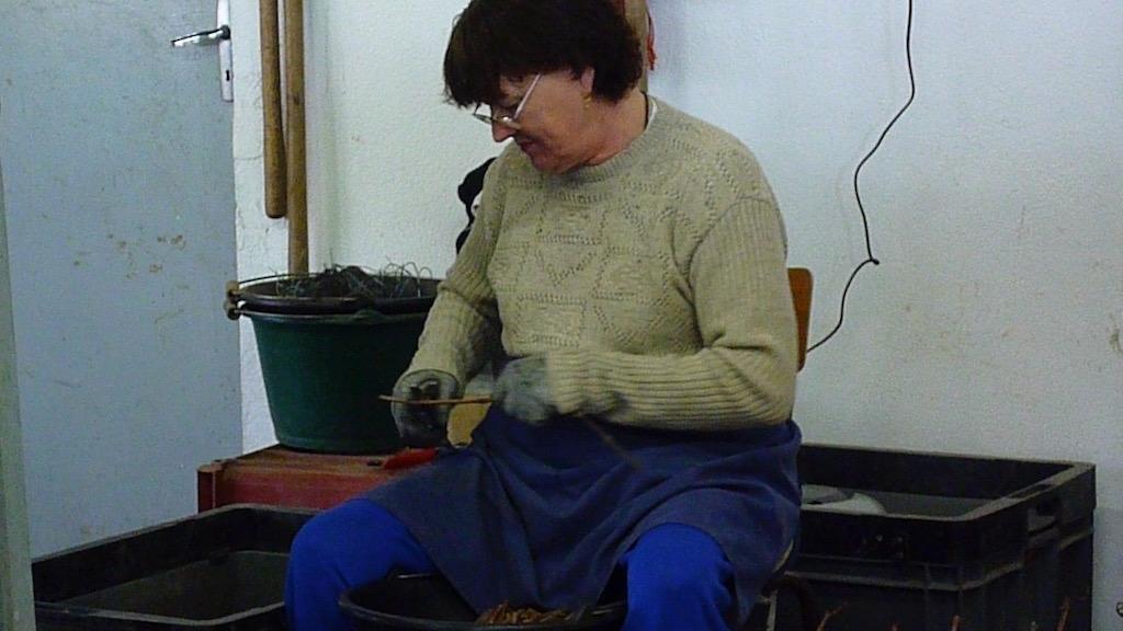 ぶどう樹の接ぎ木のための穂木を切る職人。