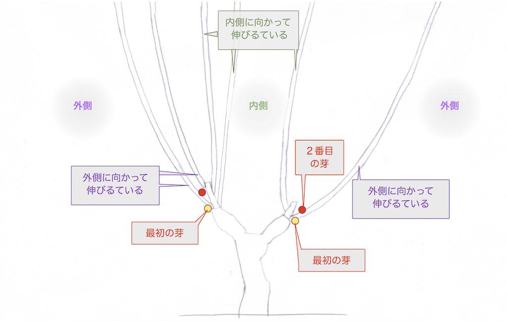 ぶどう樹の枝が伸びる方向と芽の位置を見分ける図