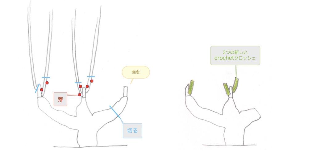 クロッシェが発芽しなくなってしまった時のgobeletゴブレの剪定方法