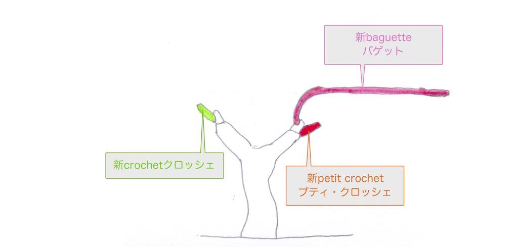 guyot poussardギュイヨ・プーサールを構成する要素の図