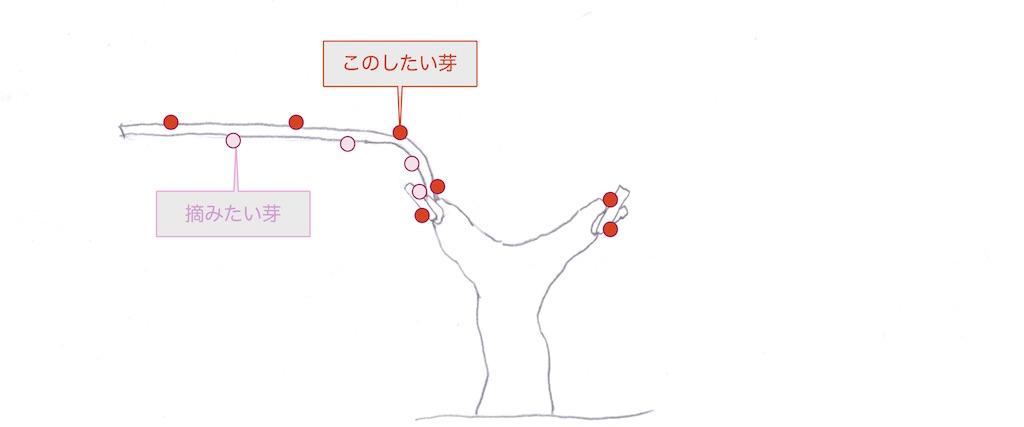 guyot poussardギュイヨ・プーサールの摘芽の図