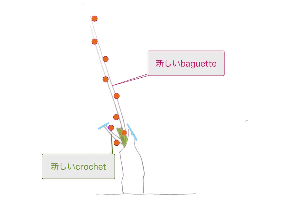 剪定後のguyot simpleギュイヨ・サンプルの図
