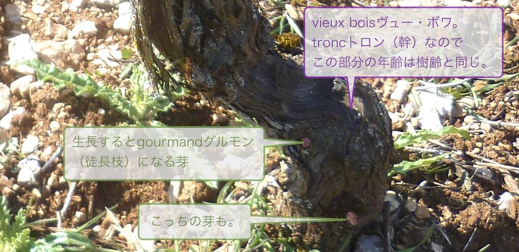vieux boisヴュー・ボワ(2歳以上の枝)から直接発芽し、生長した枝をgourmandグルモン(徒長枝)と呼ぶ