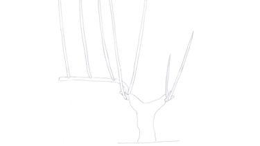 17. tailleタイユ(本剪定): guyot poussardギュイヨ・プーサール : brasブラを再生させる