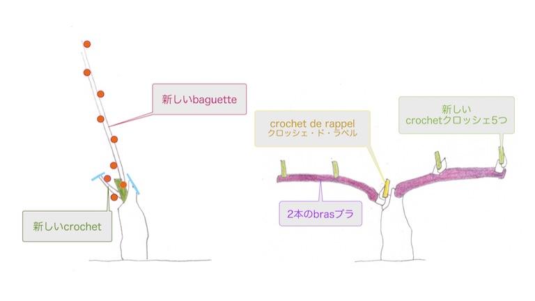剪定直後のguyot simpleギュイヨ・サンプルとcordon doubleコルドン・ドゥーブルのぶどう樹の図