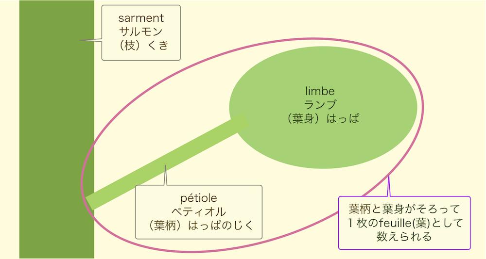 ぶどうの葉1枚は、葉柄1本と葉身1枚で構成されている。