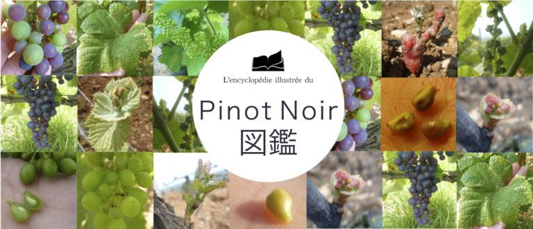 PinotNoir図鑑