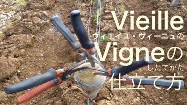 Vieille Vigneヴィエイユ・ヴィーニュの仕立て方 もくじ
