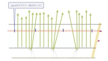 49. relevageフルヴァージュ(新梢の誘導)の最終段階とaccolageアコラージュ(新梢の固定)