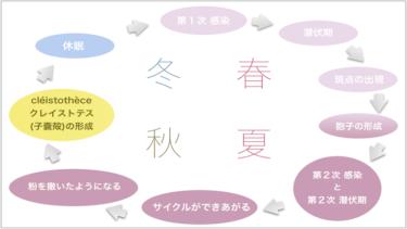46. traitementトレットモン(農薬散布): oïdiumオイディウム(うどん粉病)の性質