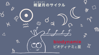 朔望月のサイクル