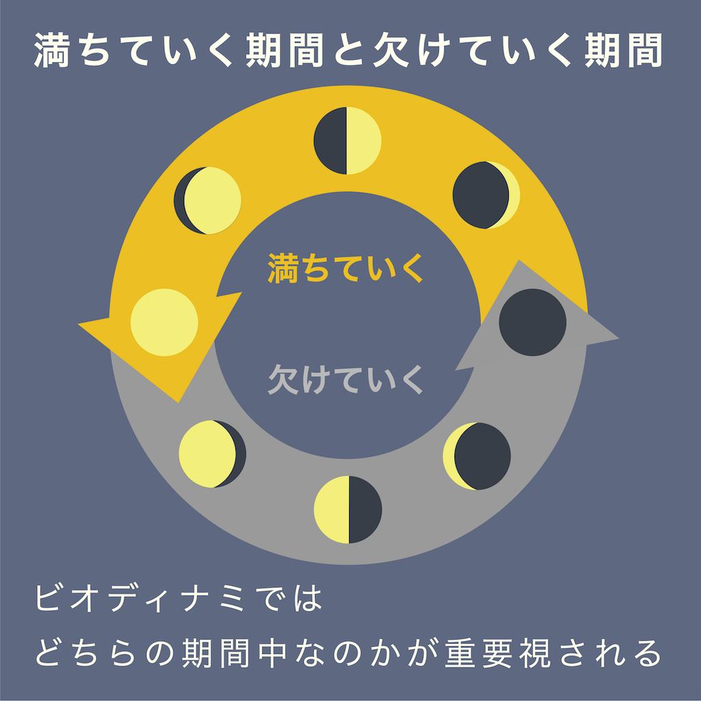 朔望月では、満ちていく期間と欠けていく期間のどちらなのかが、ビオディナミに重視される。